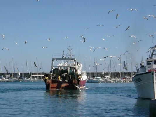 Bateau rentrant de la pêche à Sète