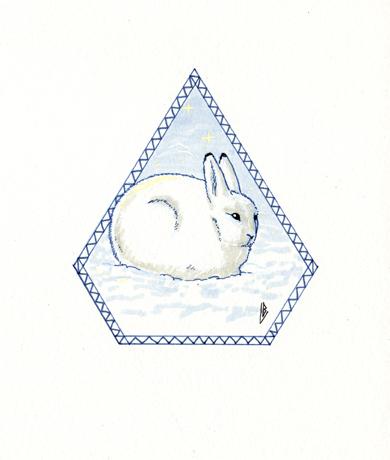 Lièvre arctique