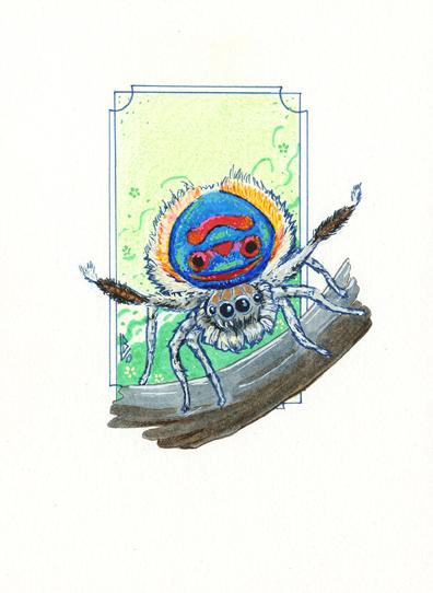 Araignée-paon
