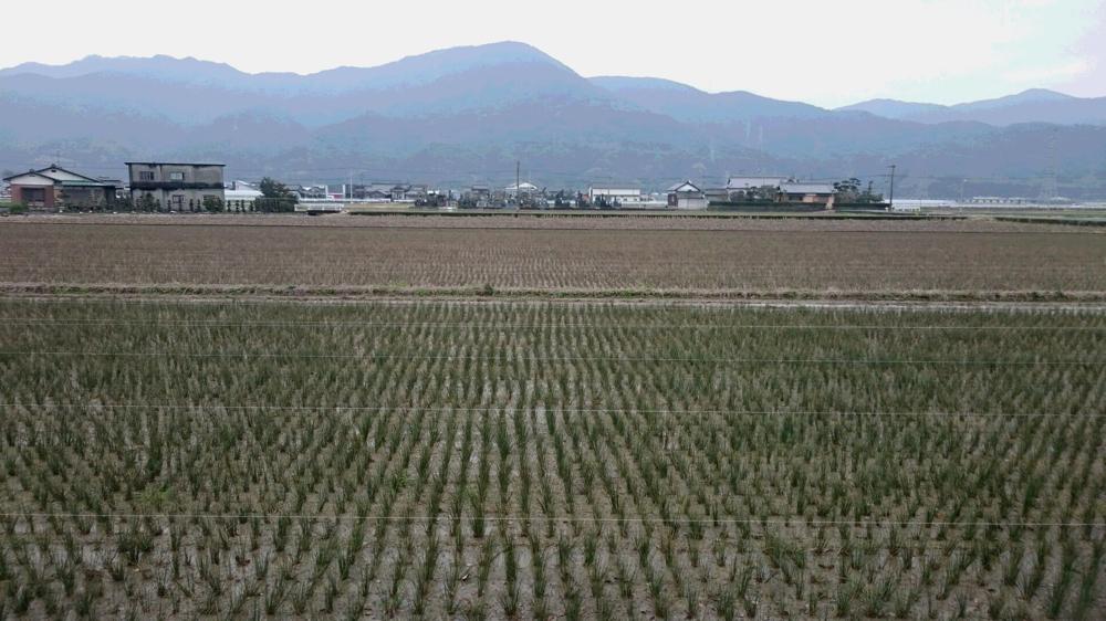 い草の産地 熊本へ来ています (^^)/ くまもんの畳縁のベンチ