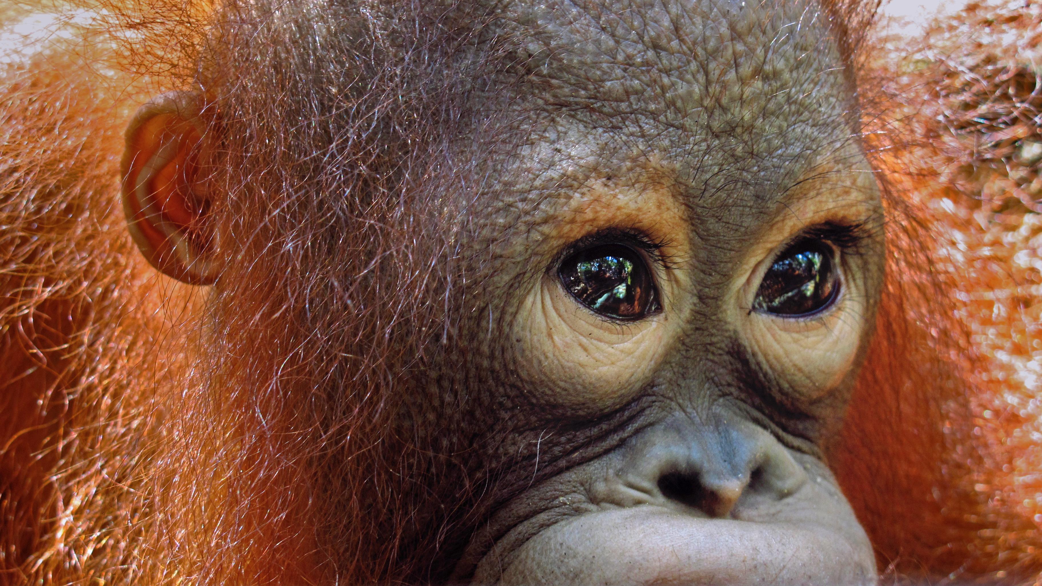 die unendlichen alternativ-bezeichnungen für palmöl - orangutanhilfe at