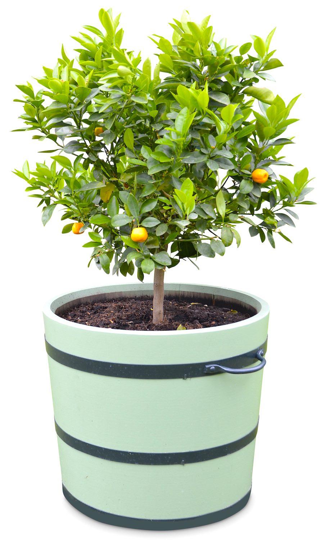 Orangeriekübel SANS, SOUCI, ab ø 30 cm