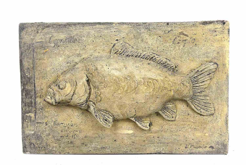 Steinrelief FISCH KARPFEN, 32 cm