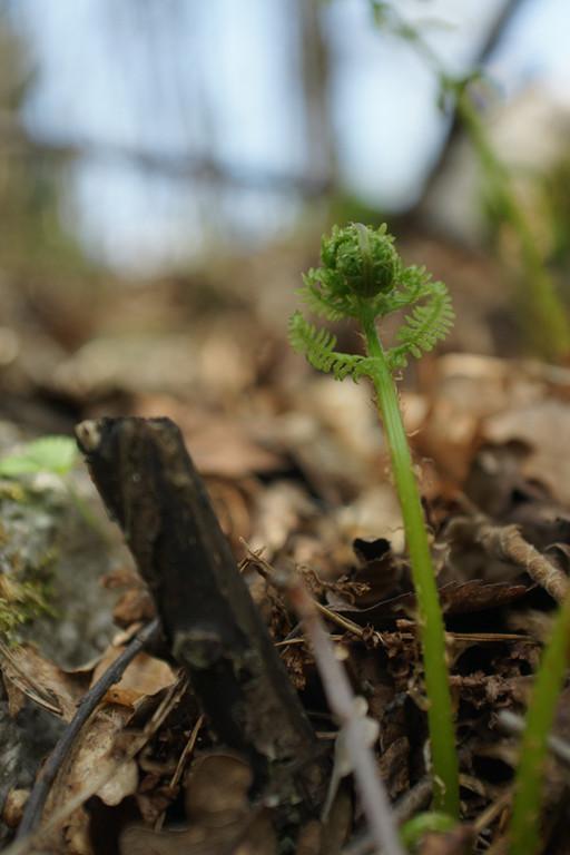 Fougère - flore et photo nature en Sologne ©Alexandre Roubalay - Acadiau d'images