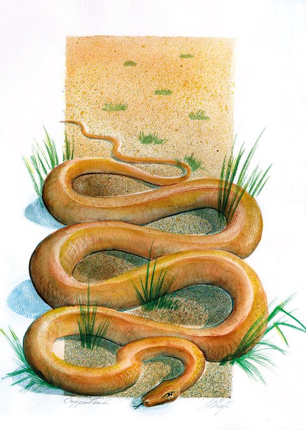 Snake ca. 30 x 42 cm, Aquarell