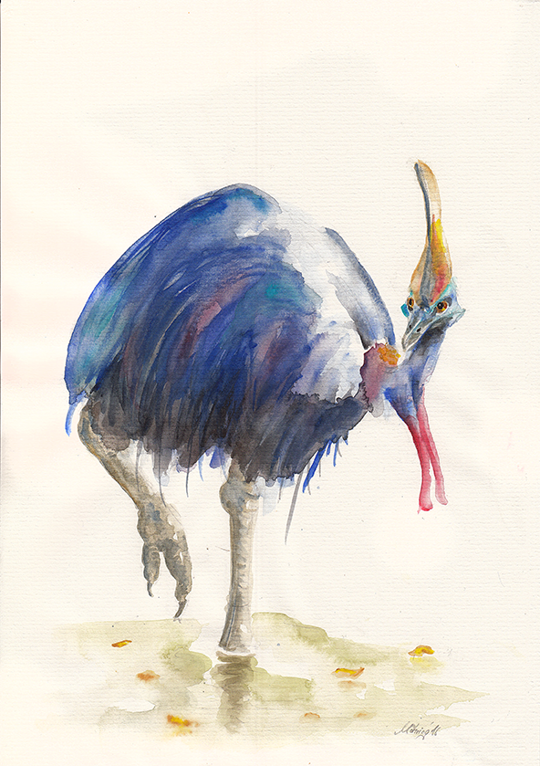 Kasuar I, Aquarell, 21 x 29,7 cm, in Privatbesitz