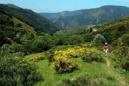 Sur le Mont Lozère en mai et juin
