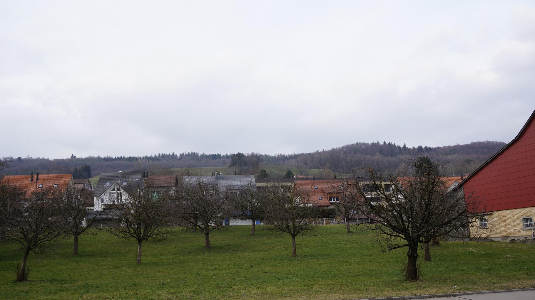 2016::Foto am selben Ort wie der MCB 1960::Sind das immer noch dieselben Bäume?