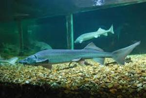 Aquarium de Lussault