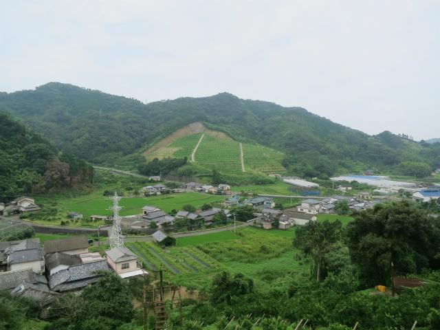 熊本県田浦地区の柑橘類の畑