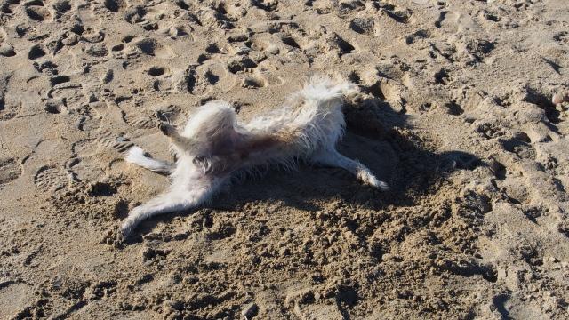 Erst ein Sandbad nehmen, ...