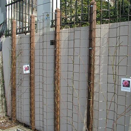 バラを誘引するためのフェンスの設置。