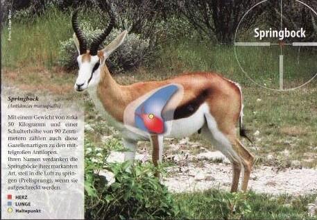 Source: Wild und Hund, Treffpunkt Afrika, Ideales Abkommen auf häufig bejagte Wildarten