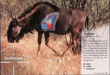 Quelle: Wild und Hund, Treffpunkt Afrika, Ideales Abkommen auf häufig bejagte Wildarten