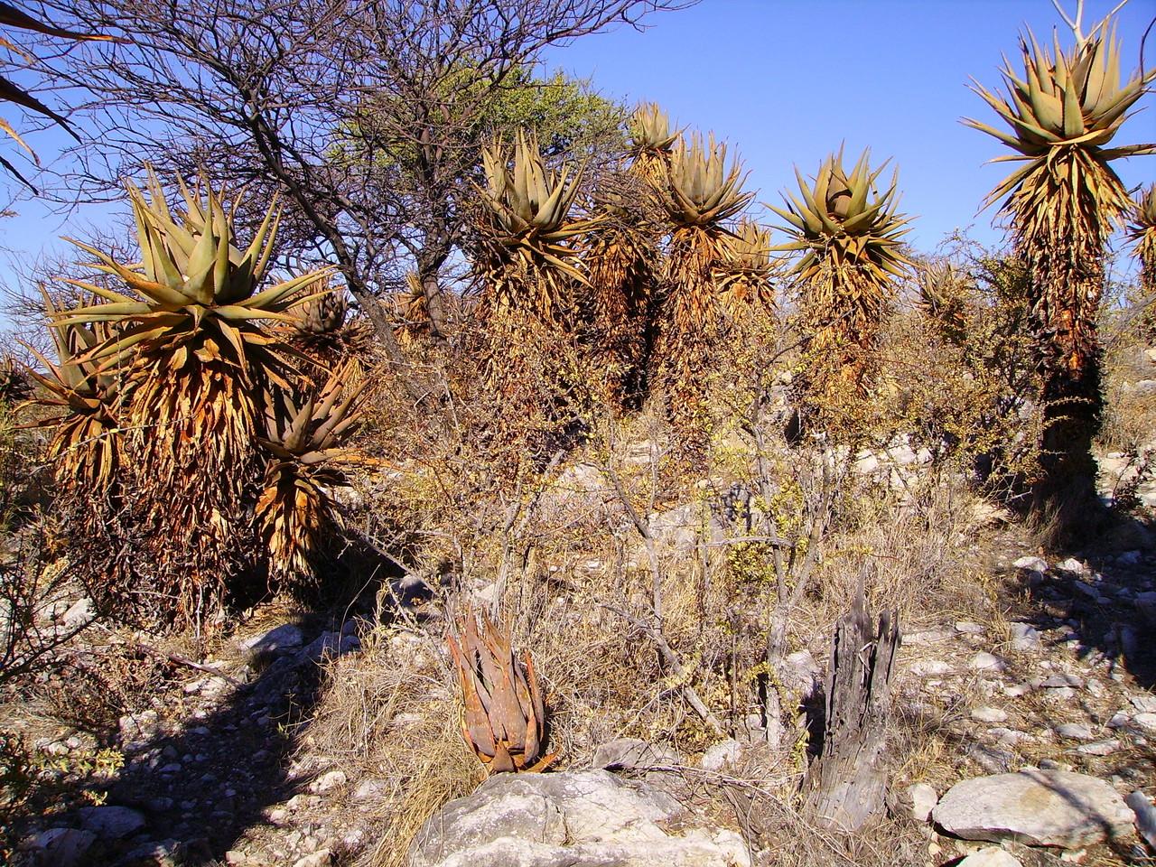 Ondombo heißt übersetzt Platz der Aloe