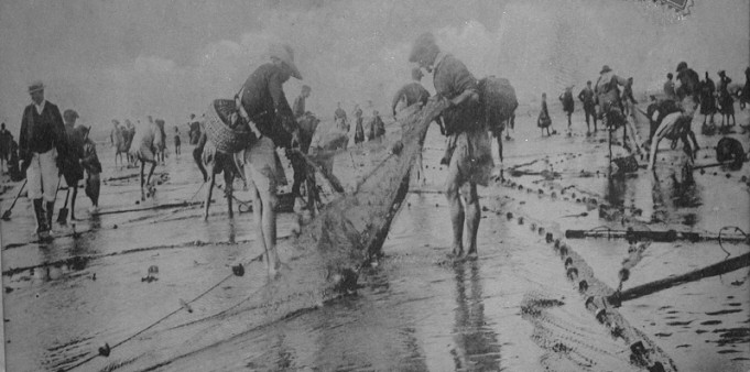 Pêche aux mulets à la senne à bras en à Hillion