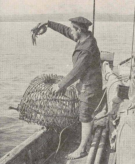 Pêcheur homardier et casier en osier