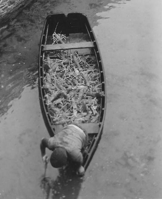 Beau chargement dans le canot du vivier (Collection Ouhlen)