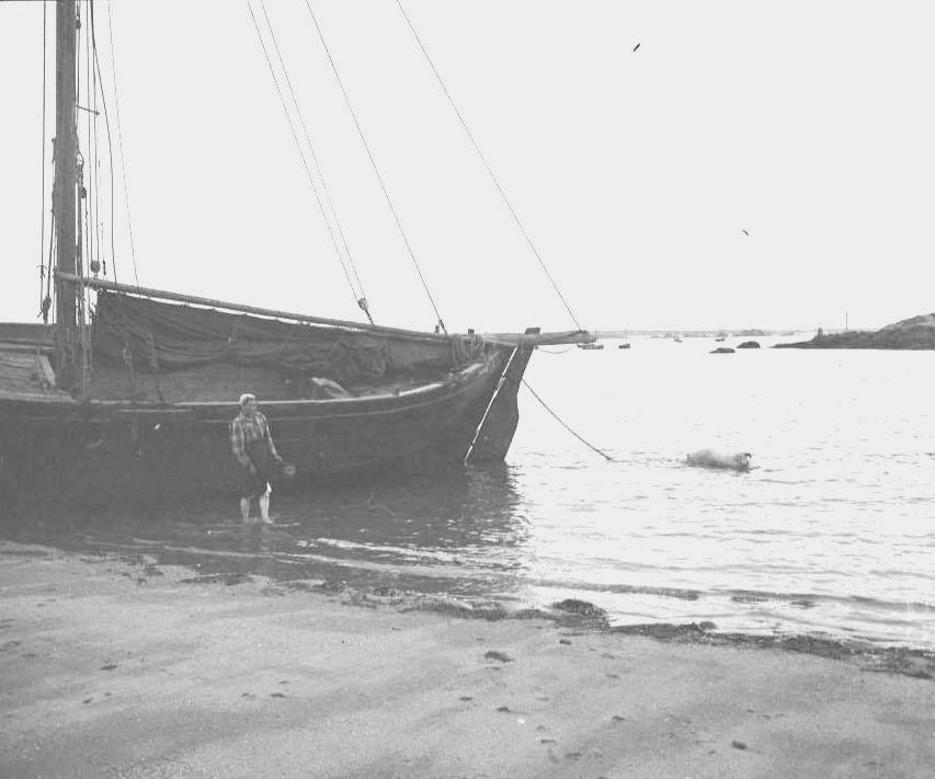 A Pors Kernoc'h, sous le Kuloc'hig une ilienne lave un cochon qui gambade tranquillement derrière la grande gabare « les neuf frères » à Claude Cabioch qui l'arme au bornage, pour le transport entre l'île et le continent et l'exploitation du sable