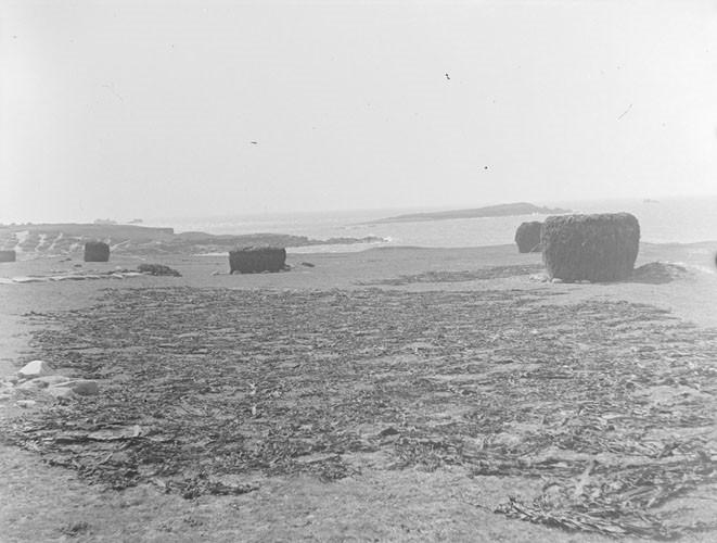 Séchage des laminaires sur la dune