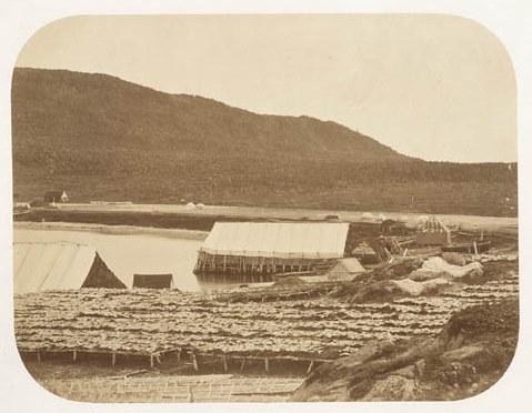 Etablissement français de terre Neuve vers 1880, les chaffauds sont de vastes hangars sur pilotis recouvert de toile à voile ou l'on prépare la morue