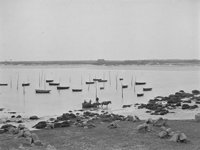 Mouillage des canots goémoniers  sur pieux et déchargement d'un canot