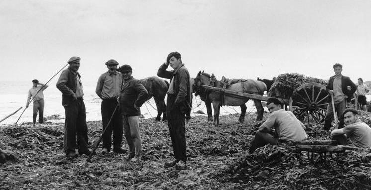 La pose des goémoniers, Finistère nord photographiée par Denise Colomb dans les années 50