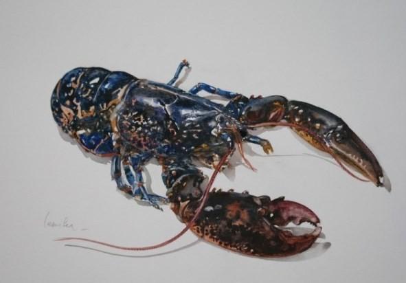 Etude de homard par Yann Lesacher  (publié avec son aimable autorisation)