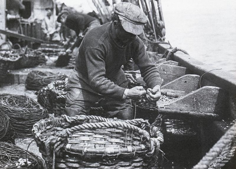 La boette couramment utilisée sur les bancs est le bulot péché avec les caudrettes  sorte de nase avec un filet tronconique