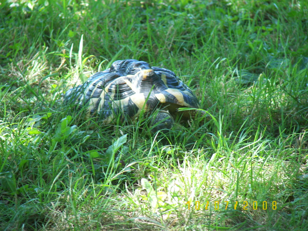 Mme Tortue née 09/09/1999