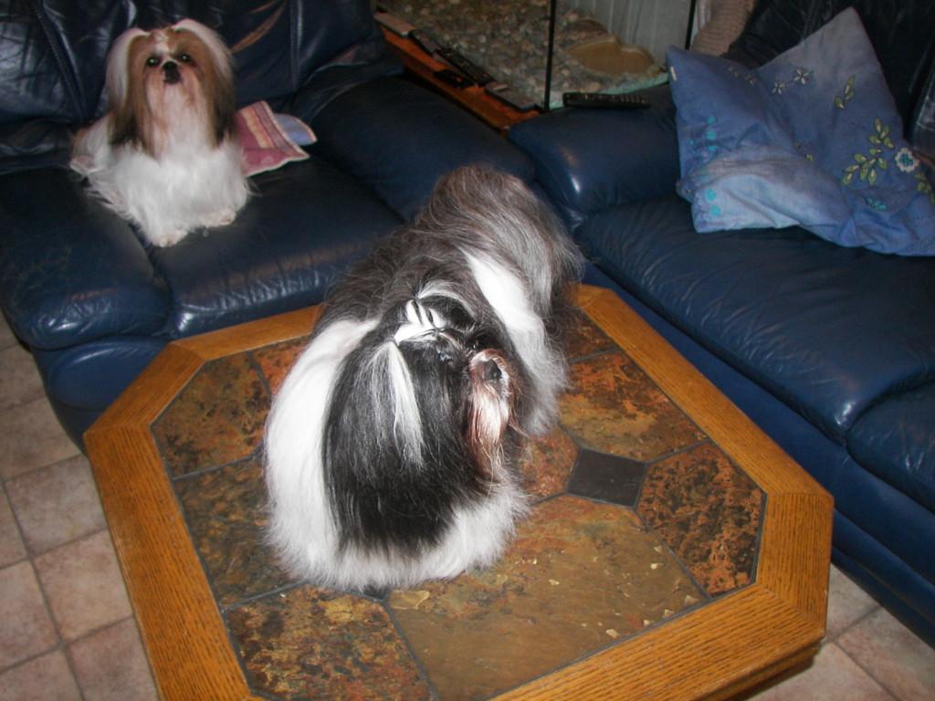 Bergamote à l'arrière et Danaé sur la table