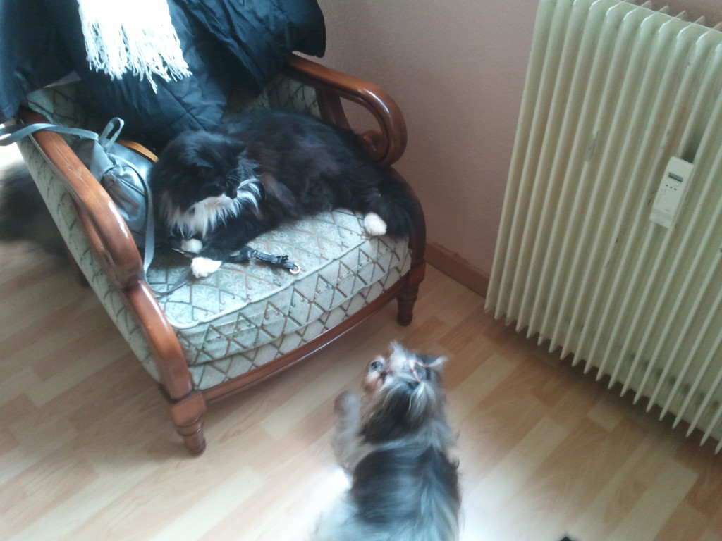 Domino le chat avec Lily