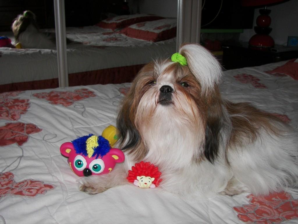 Bergamote le jour de mes 2 ans le 22 novembre 2008