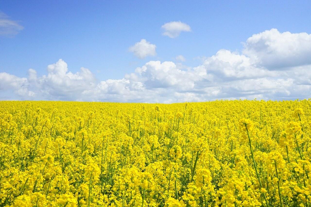 Biokraftstoffhandel