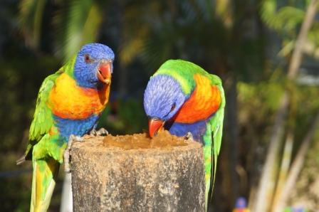 Whitsundays, Australien