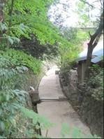 大崎八幡宮太鼓橋付近