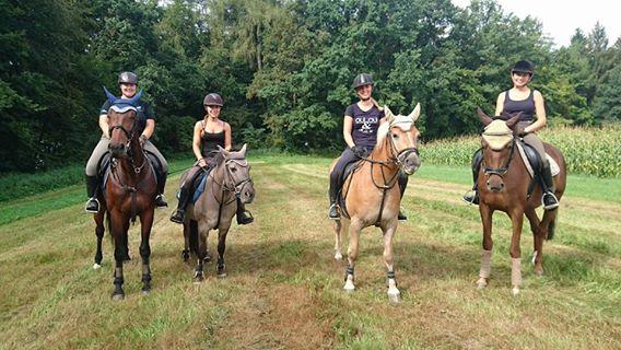 Unsere Schulpferde auf der Reiter-Rallye in Bellenberg, September 2016