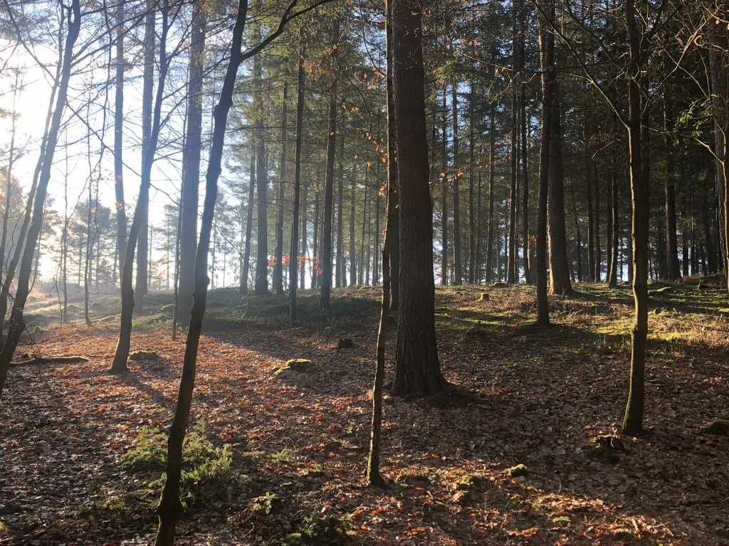 Waldluft macht gesund!