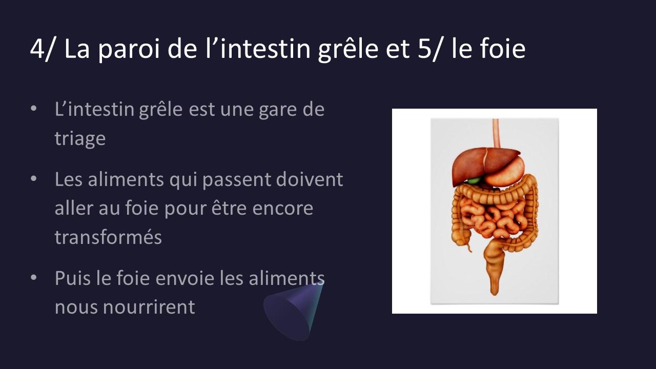 Eczema foie et tube digestif