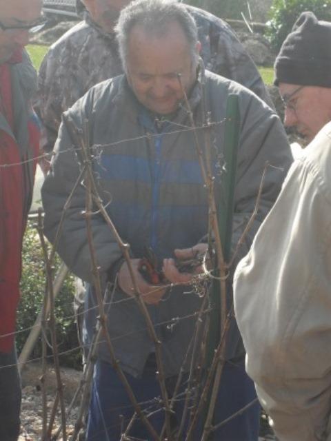 la greffe d'un arbre fruitier