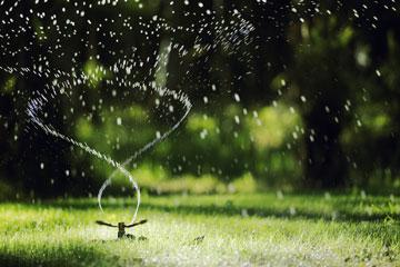 watering florida lawn
