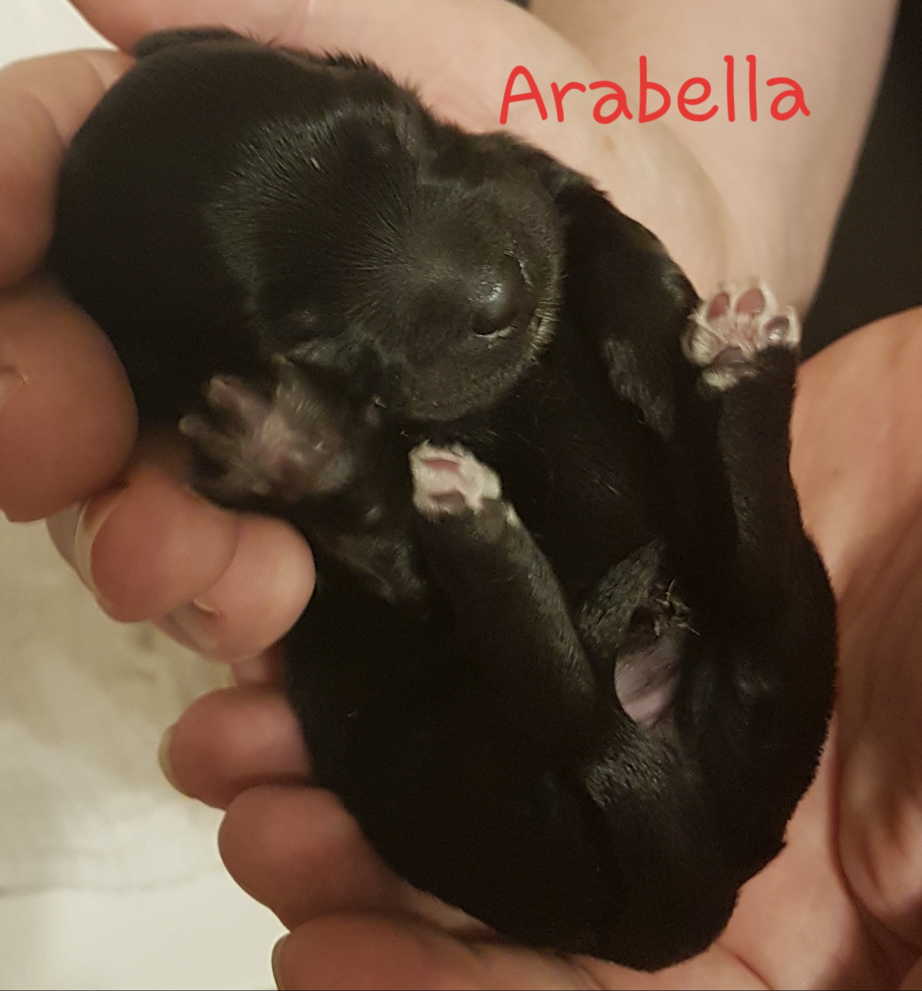 Prinzessin Arabella