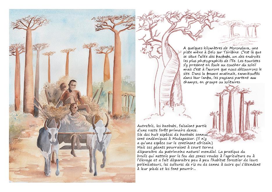 Carnet de voyage à Madagascar allée des baobabs