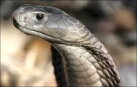 Horvi-Enzym-Therapie Schlangen Enzym
