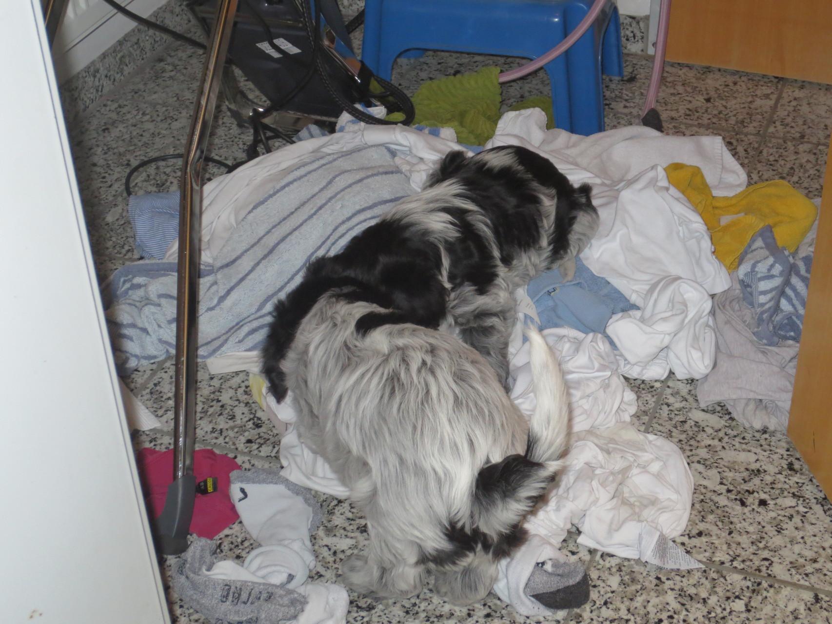 Kleine Haushaltshelfer in der Waschküche