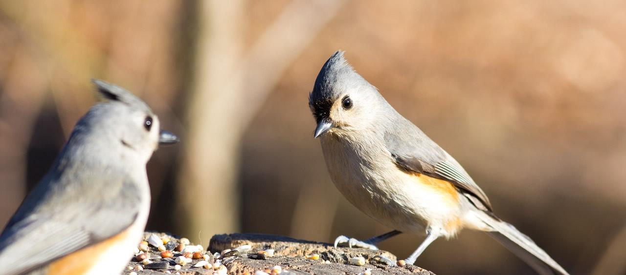 Vogelfutter für die heimischen Singvögel
