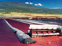 ハワイ島のアスタキサンチン