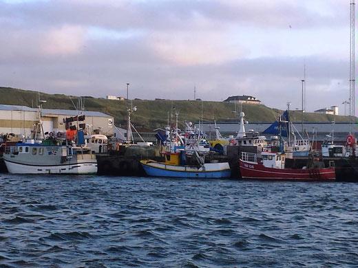 Der Hafen von Hanstholm ist ein großer, betriebsamer Fischereihafen, er gilt als der größte Konsumfischereihafen Dänemarks. Hier gibt es eine Menge großer und kleiner Fischerboote, die verschiedene Formen der Fischerei betreiben.