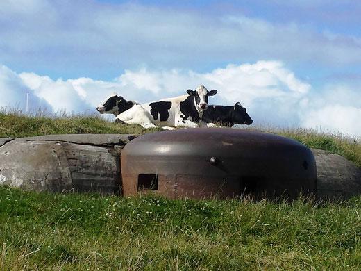 Glückliche Kühe auf grünen und blühenden Wiesen – Natur pur