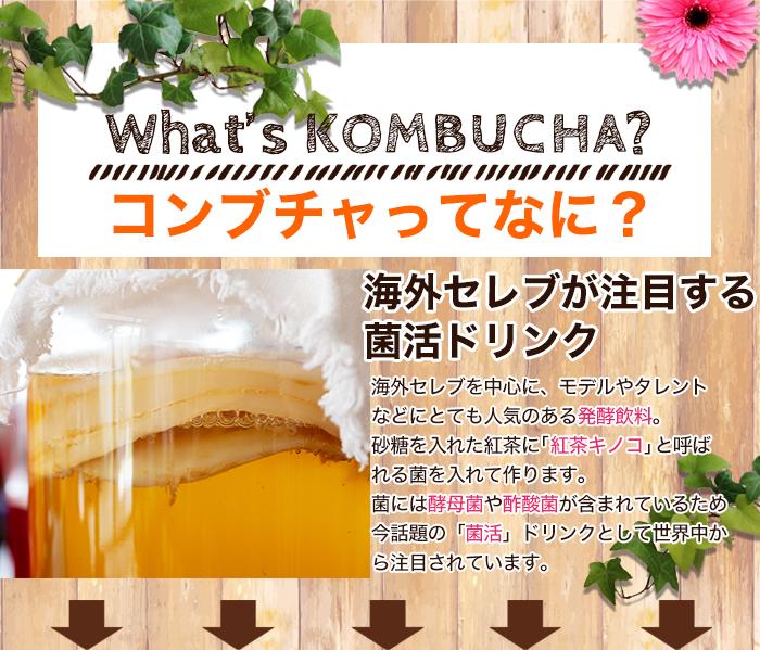 ■POINT.1 本物のコンブチャを使用 原材料名:ルイボスティー(南アフリカ産)、キャンドルブッシュ、ローズヒップ、      発酵紅茶エキス末(デキストリン、紅茶キノコ)、オレンジピール、      ハニーブッシュ、ハイビスカス、ジャスミンフラワー 「発酵紅茶エキス」または「紅茶キノコ」と書かれているものが本物のコンブチャ!!